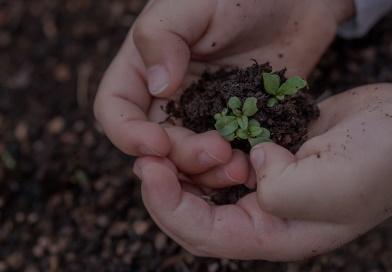 Para cuidar la Creación: semana de aprendizaje
