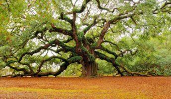 árboles-9-730x468