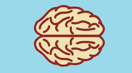 1 Cerebro
