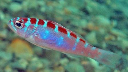 1 Hermafrodita pez