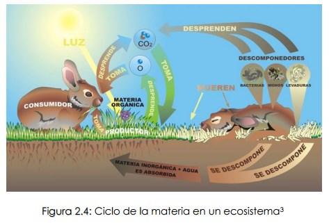 22 Ciclo De La Materia Y Flujo De La Energía En Un Ecosistema