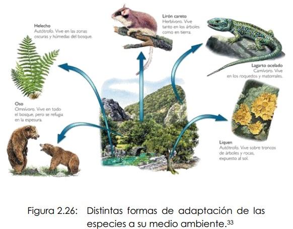 Resultado de imagen de Las mutaciones por adaptación al medio