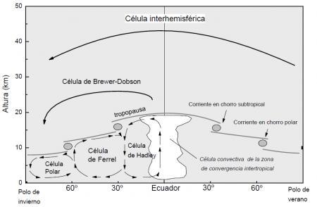 20110423-Celula interhemisferica1.png