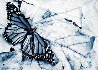 20140305-20061101233516-las-mariposas-heladas-de-magia.jpg