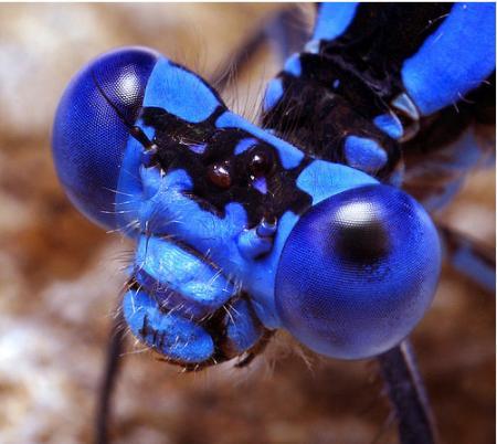 20100226-insectos.jpg