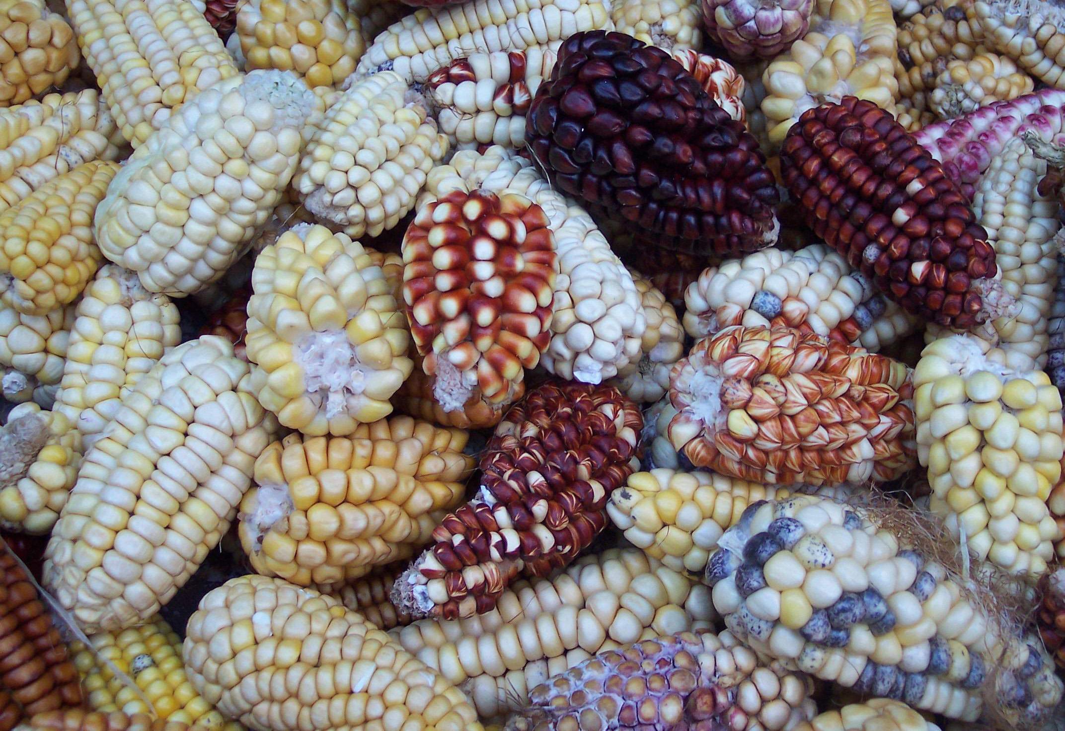 Choclos peruanos