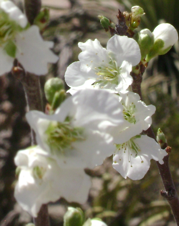 Flor de Mexico