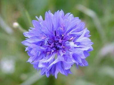 Flor anti estrés
