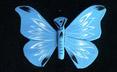 20121117-mariposa_azul.jpg