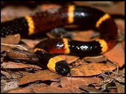20110513-serpiente.jpg
