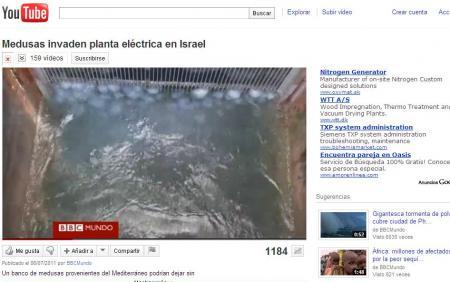 20110719-JELLYFISH BBC.jpg