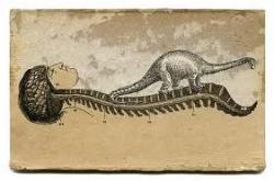 20130821-9_breves_dinosaurio.jpg