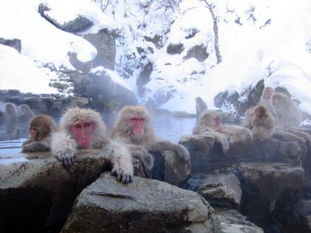 http://es.wikipedia.org/wiki/Archivo:Jigokudani_hotspring_in_Nagano_Japan_001.jpg