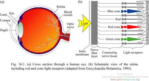 20101130-F16-01 Human eye 2.jpg