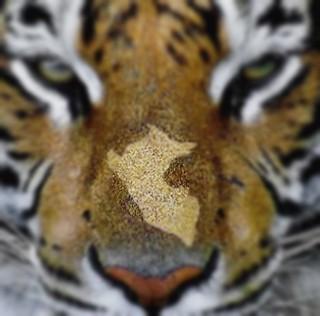 peru nuevo tigre de america latina