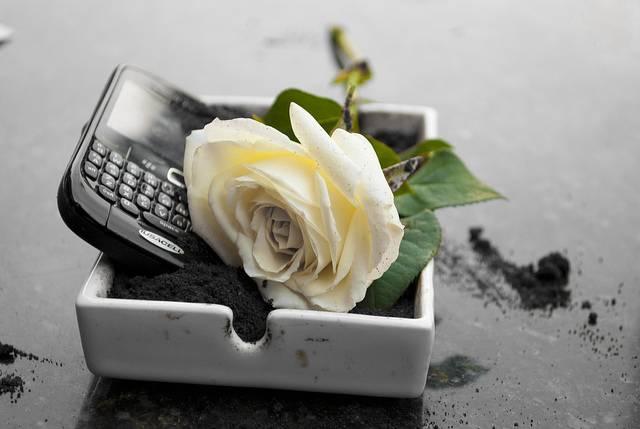 una rosa por la muerte de BB