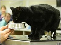 Las nuevas patas biónicas de Óscar lo han convertido en un gato que pasará a la historia.