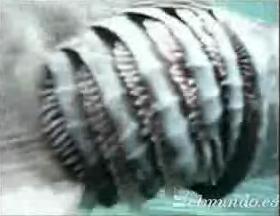 6 Agallas del tiburón con volantes Fuente: Video de http://www.elmundo.es/elmundo/2007/01/24/ciencia/1169629932.html