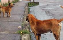 www.guerrillero.co.cu/.../octubre/perros.jpg