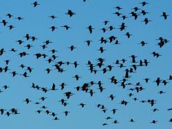 20120228-aves.jpg