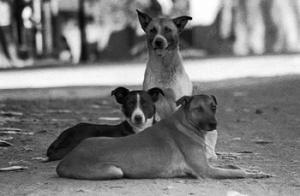 20120513-perros-de-la-calle.jpg