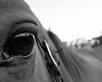 20120609-ojo_caballo.jpg